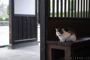 青森県弘前市にゃんこ(弘前城付近)